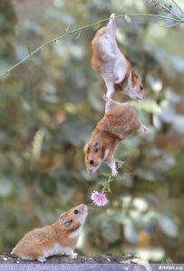 hamster_help